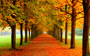 tumblr_static_autumn_leaves_on_road-2560x1600